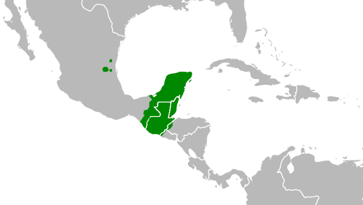 The location of Mayan speaking populations. The Huastecan branch, spoken in communities much further north than the rest of the Mayan family, in not included in the Maya Country map.
