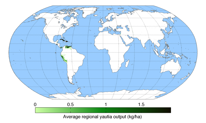 average-regional-output-yautia